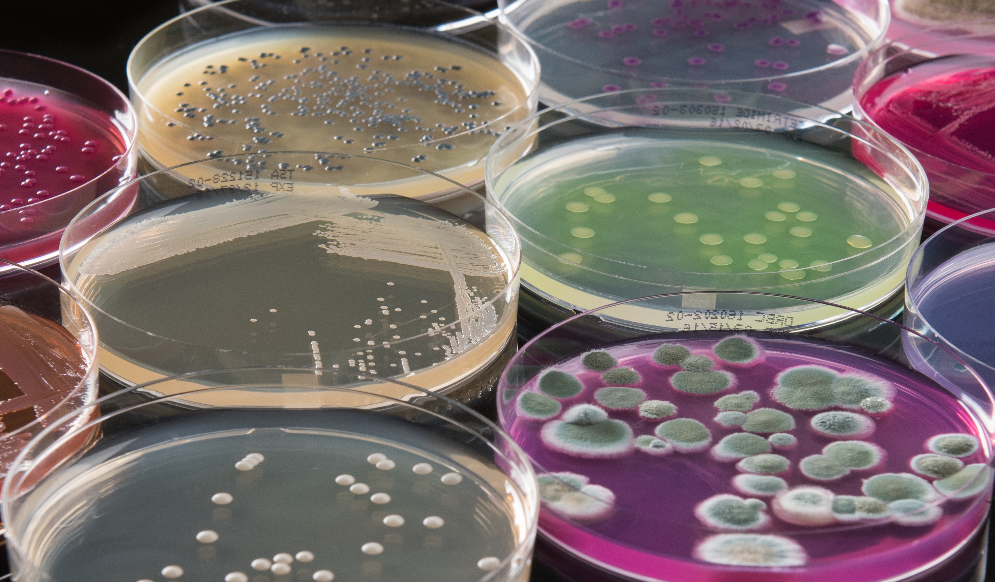 Microbiological_Testing-1